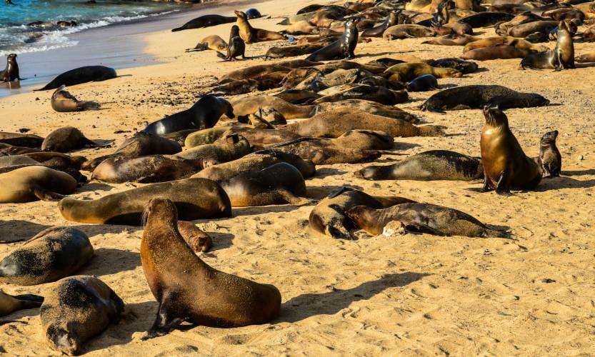 Sea Lions on San Cristobal Island