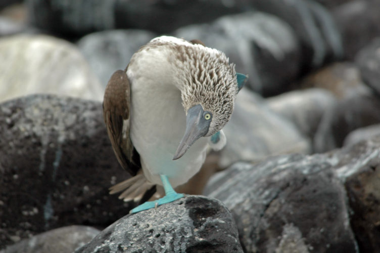 Espanola Island Wildlife