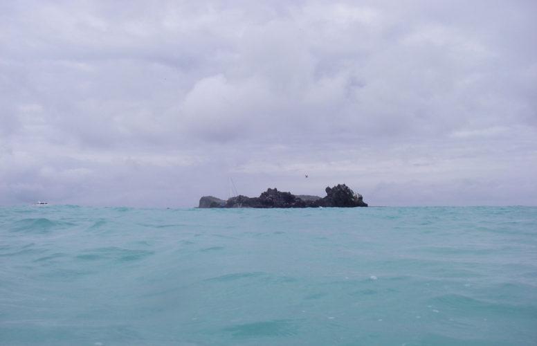Snorkelling at Bahia Gardner
