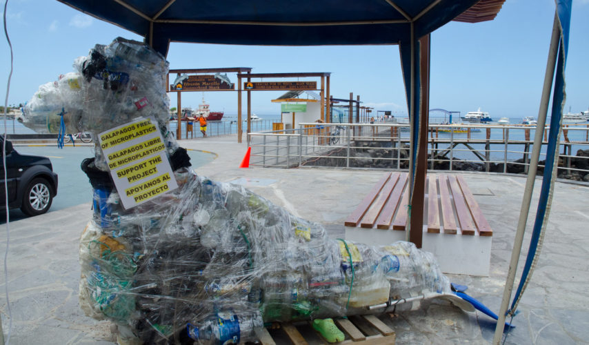 Plastic Sea Lion